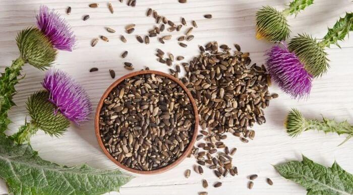 armurariu si seminte de armurariu cu silimarina