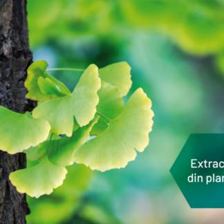 Extracte din plante